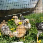 пластиковая сетка от птиц
